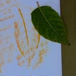 leaf rubbing crayon